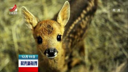 晨光新视界 2018 偷猎者射上百只鹿入狱 法院:坐牢期间每月看一期《小鹿斑比》