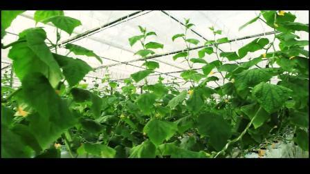 2018年新型职业农民培训视频-安吉县科达职业技能培训学校