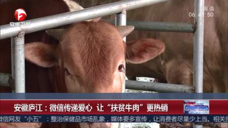 """安徽庐江:微信传递爱心 让""""扶贫牛肉""""更热销"""