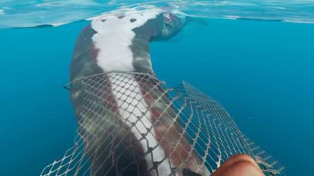 荒岛求生45:我用石矛苦战深海霸主大白鲨,殊死搏斗险些被咬烂