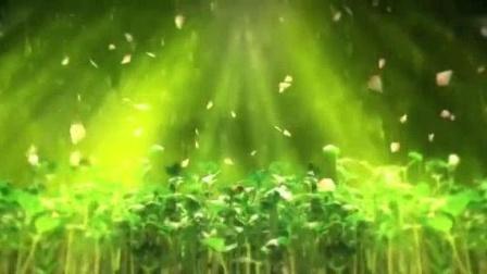 我在春天万物复苏植物生长春雨种子发芽自然风