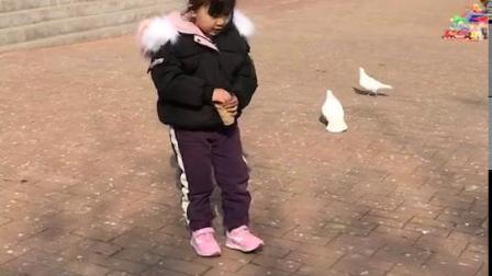喂鸽子🕊️