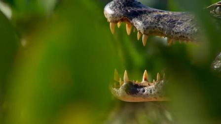 【地球脉动2】笑,当动物们的叫声换成人声时