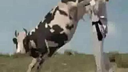人牛大战(又名功夫奶牛)