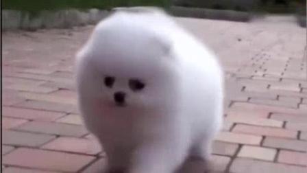 我在世界上最萌的最可爱的狗狗搞笑视频截了一