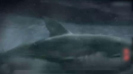 3分钟速看搞笑科幻片《夺命双头鲨》,看到最后才知道谁是主角