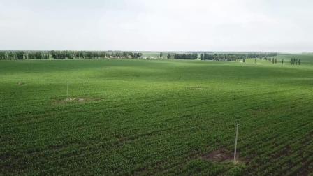 备春耕之航拍视角看玉米出苗期