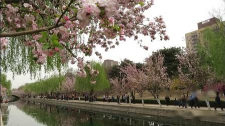 休闲漫步《北京海棠花溪》 2019年4月6日。