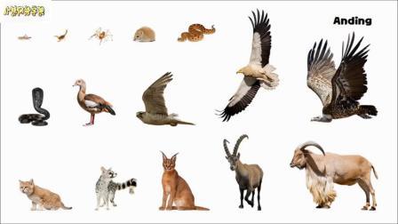 埃及动物图片游戏