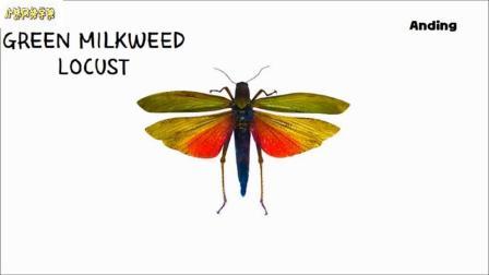 彩色昆虫图片游戏