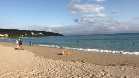 L6旅行随手拍-被海浪吓到,忘记把木头捡回来的可爱瞬间