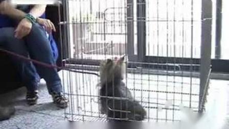 训犬教程:狗狗连续吠叫控制方法