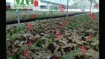 贵州中科农经生物科技有限公司 宝灵圣草加盟的好项目