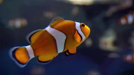 s946 2K画质梦幻海底世界热带鱼金鱼海水视频素材舞台 晚会视频 LED PR