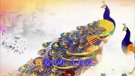《放生偈》  佛教歌曲   超清_标清