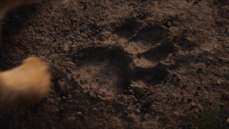 新版《狮子王》内地定档预告
