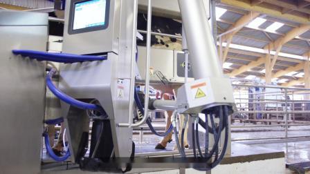 VMS V300 荷兰牧场故事
