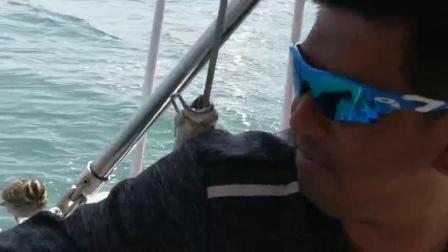 帆船上的小鸟