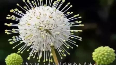 美文九集2019-07-04