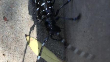 昆虫 爬行 视频
