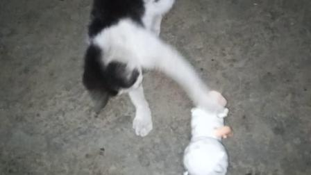 【 萌宠日常 】02 超萌可爱小猫咪与小狗玩耍 猫咪趣事 家有萌宠欢乐多 轻松时刻 动物搞笑