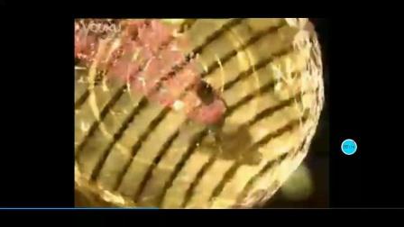 [自制广告]-2008年澳雪梦幻海马香水沐浴露广告《自信篇》