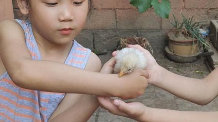 """""""小鸡""""成了小朋友的玩具了"""