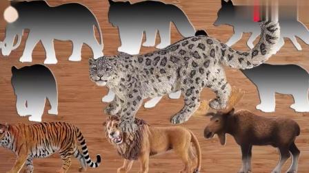 帮野生动物找到正确的位置,认识狮子,老虎,大象,豹,熊,狐狸