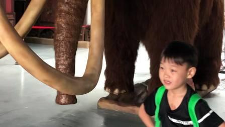 卡卡去学校看猛犸象
