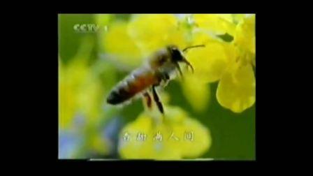 【中国大陆广告】2002年 1 中国人寿保险公司广告