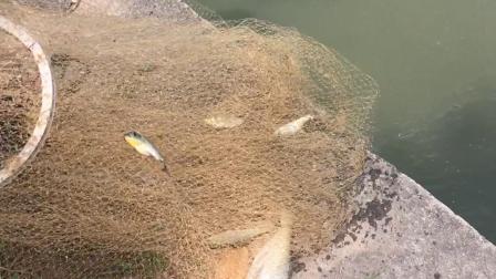 河边网鱼的大叔只要大鱼