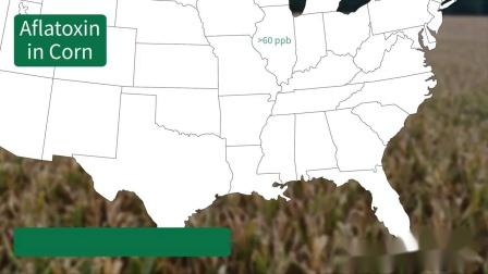 纽勤北美真菌毒素报告2019-10-14