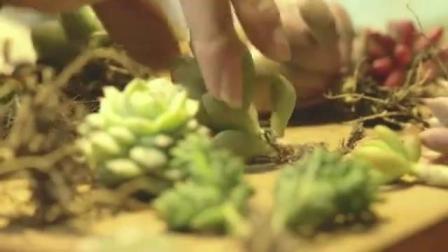 壹分皿多肉植物组合盆栽