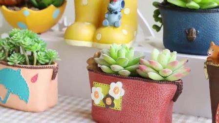 多肉植物盆栽,可爱创意小清新