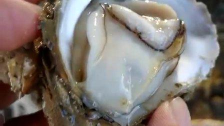北海勤旺生蚝养殖厂,优质广州生蚝批发/采购,广东中山生蚝一手货源批发市场