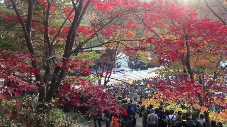 가을 단풍맞이 공연-(1)