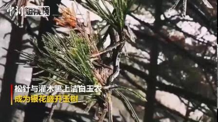 太美啦!安徽黄山迎今冬首场雾凇景观 via@中新视频