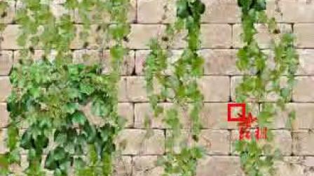 红枫老师讲解BT基础之十八《图片搭建-苒苒绿意浓》第一讲