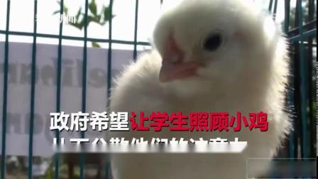 """手机变""""手鸡""""!印尼给中小学生发小鸡戒手机瘾 via@全球眼News"""