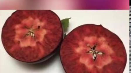 【,可在网上订购,你会吃吗?】Cosmic Crisp苹果是Honeycrisp和Enterprise的杂交品种,由华盛顿州立大学在1997...