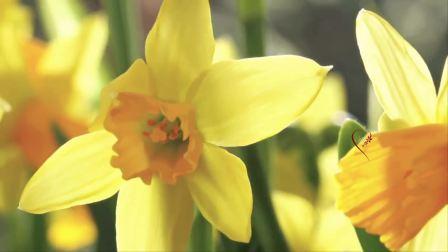Waltz Of Flowers (music Stamatis