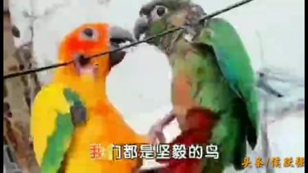 一首:坚毅的鸟