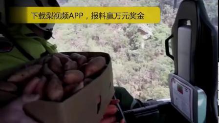 【,包括胡萝卜和红薯】据ABC News1月13日报道,澳洲新南威尔士州政府计划空投4000磅(约1.8吨)食物帮助山火地区的动物,包括胡萝...
