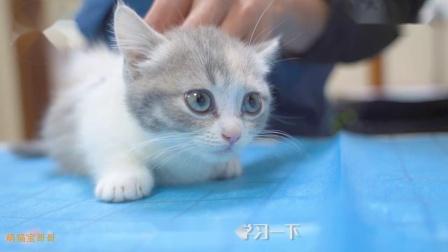 带两只小奶猫去打针,把全医院萌化了,医生抱着不撒手!