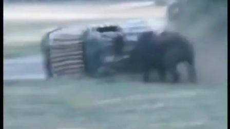 小汽车闯入犀牛领地的后果