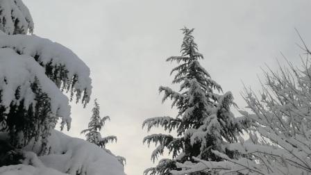 2020年正月初九雪景