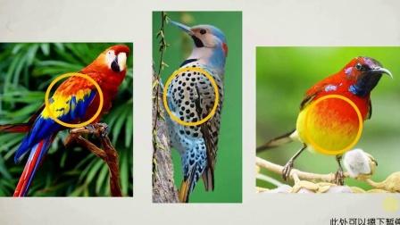 二年级_美术_我喜欢的鸟
