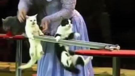 猫咪双杠表演!