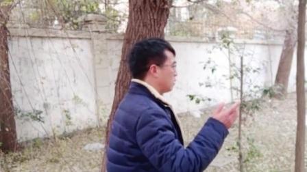 淮海戏-梁小林唱腔集锦007