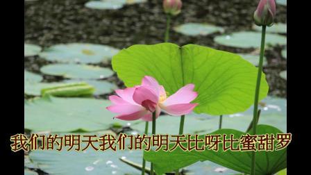 沈北新区喜洋洋广场舞《我们的生活比蜜甜上-赏荷》字幕1080p